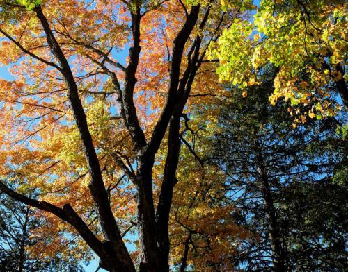fall-colors-4