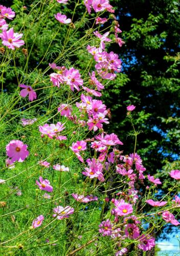 wildflowers and sky